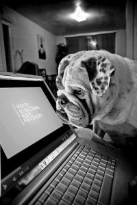 The church management solution IconCMO on a laptop screen with a bully breed dog looking at the screen waiting for the church software training video to start. Picture is black and white.