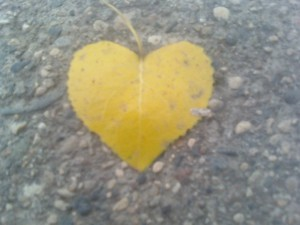 yellow leaf on the ground in a heart shape
