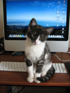 black and white kitten in front of the computer and keyboard.