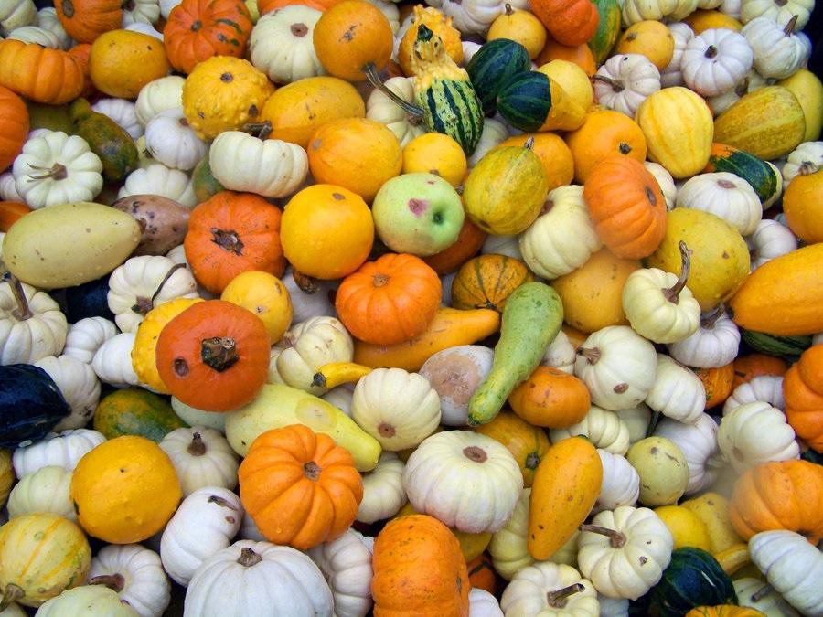 Autumn Squash by misterunlucky on deviantart