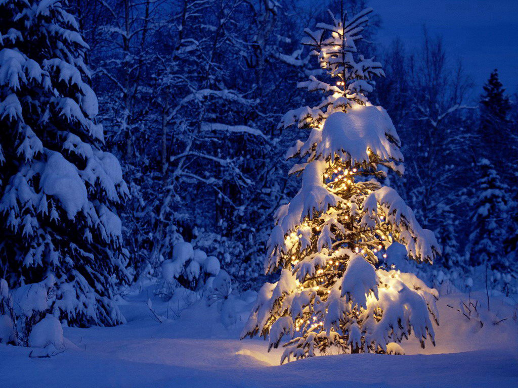Christmas tree in the forest with lights on it.